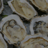 12 Reasons to Get On Board with Oyster Fest